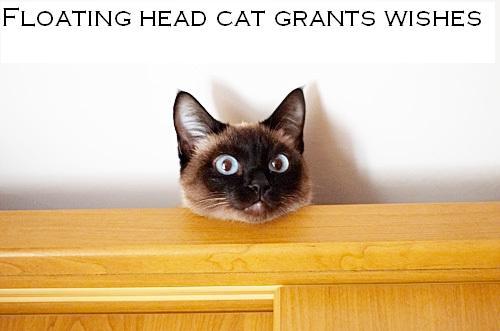 Psychic Cat Game Amazon