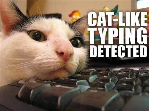 catliketyping.jpg